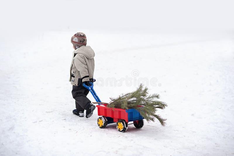 Pysen bär en julgran med den röda vagnen Barnet väljer en julgran royaltyfri fotografi