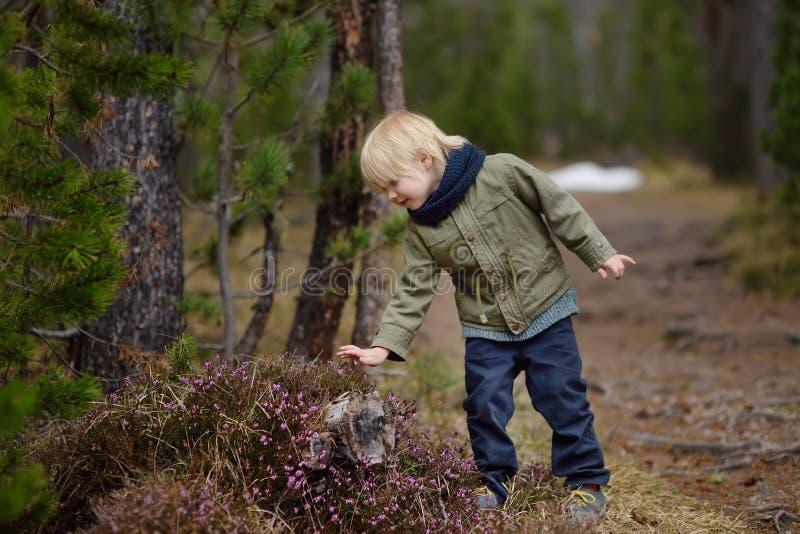 Pysen för Ð-¡ ute undersöker en Heather Bush i den schweiziska nationalparken på våren royaltyfri foto