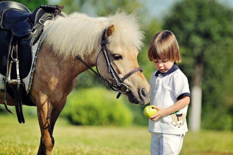 Pysen ger hans ponny ett äpple royaltyfri foto