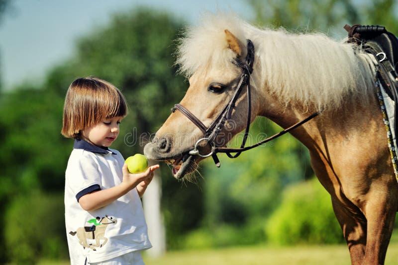 Pysen ger hans ponny ett äpple arkivbild