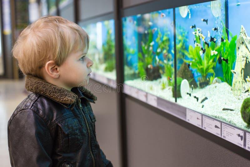 Pysen håller ögonen på fiskar i akvarium royaltyfri foto
