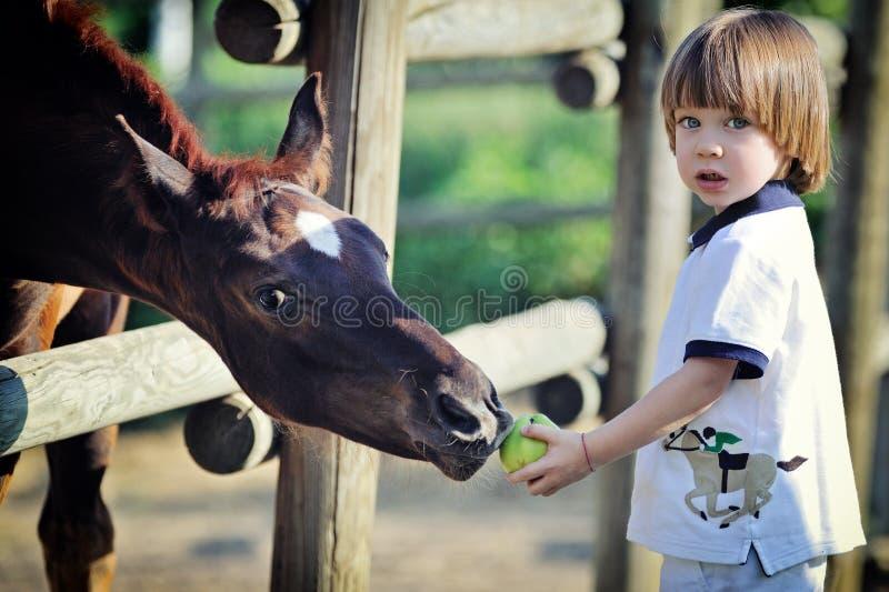 Pysen matar hästar med äpplet arkivbild
