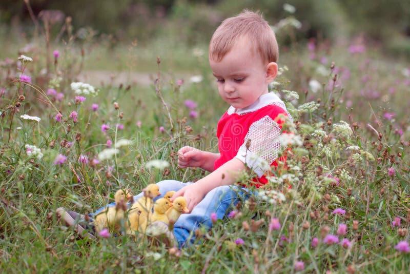 Pyssammanträde i gräset och spela med ankungar arkivfoto