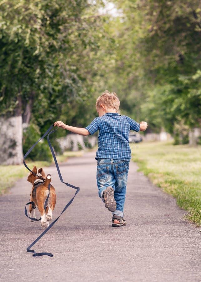 Pysspring med hans beaglevalp arkivbilder