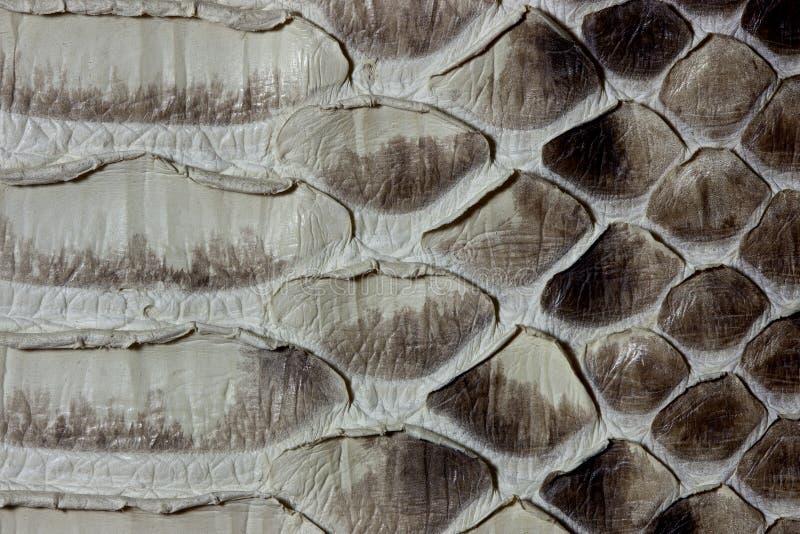 python δέρμα στοκ φωτογραφίες με δικαίωμα ελεύθερης χρήσης