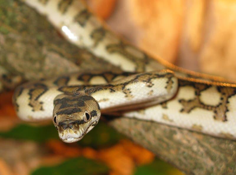 Python stock afbeeldingen