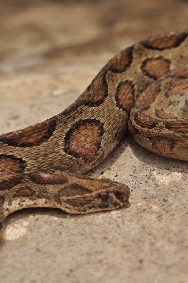 python royalty-vrije stock afbeeldingen