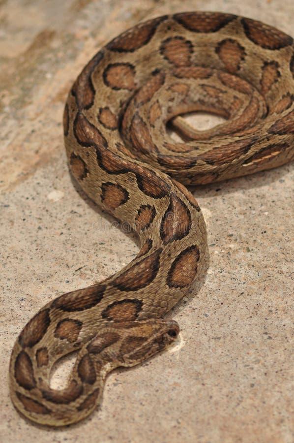 python stock foto