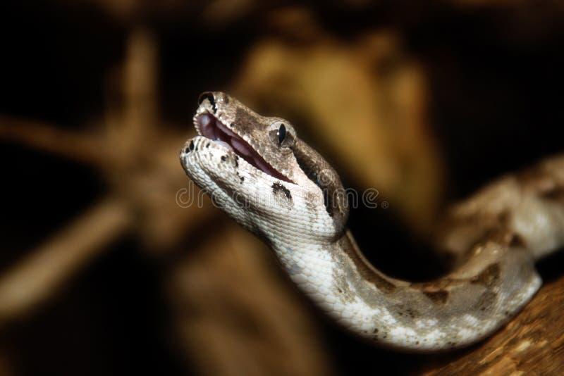 python στοκ εικόνες