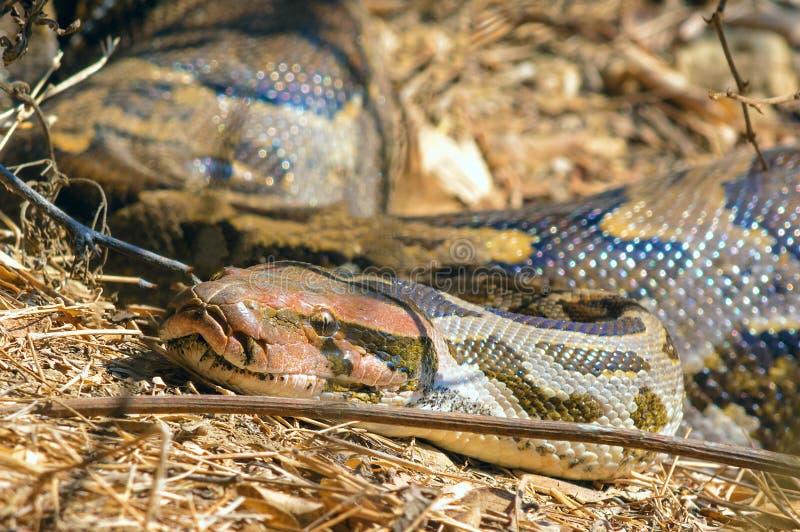 python photo stock