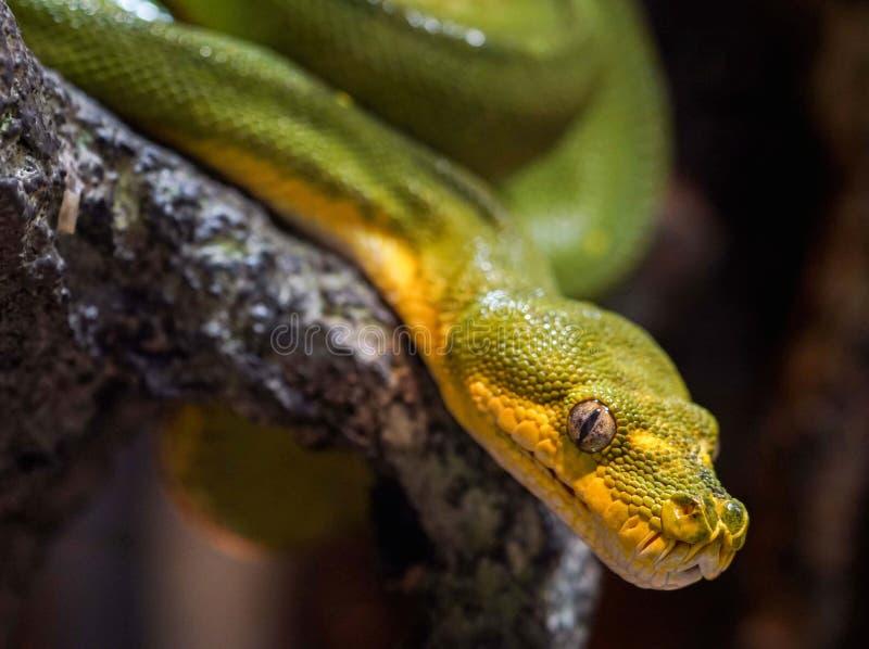 python images libres de droits