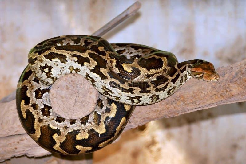 python στοκ εικόνα