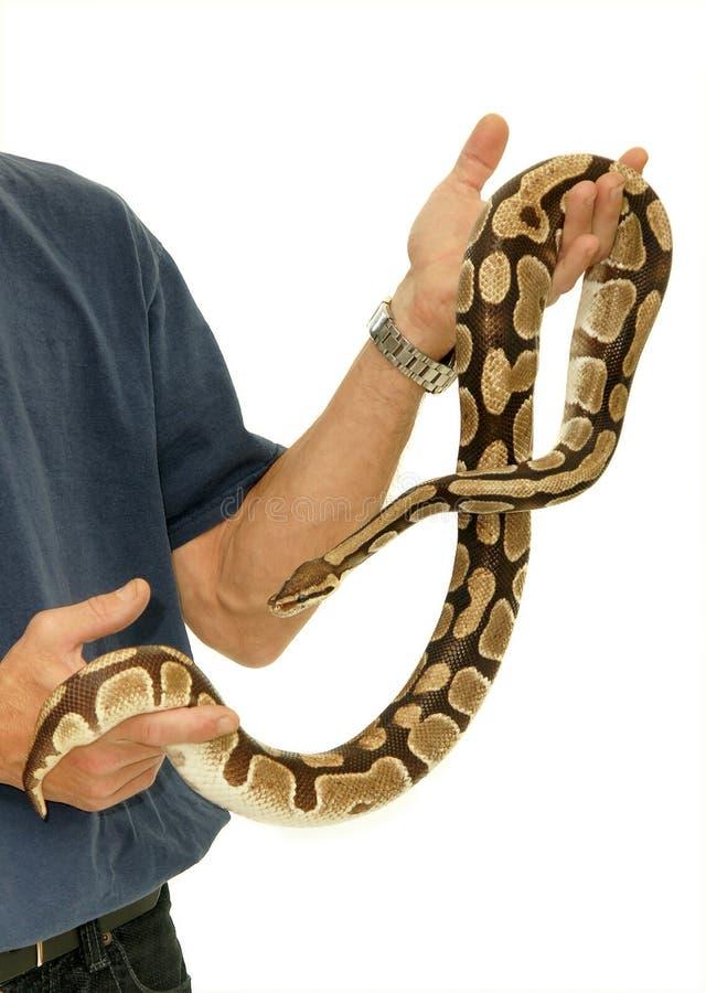 Python de bille photos stock