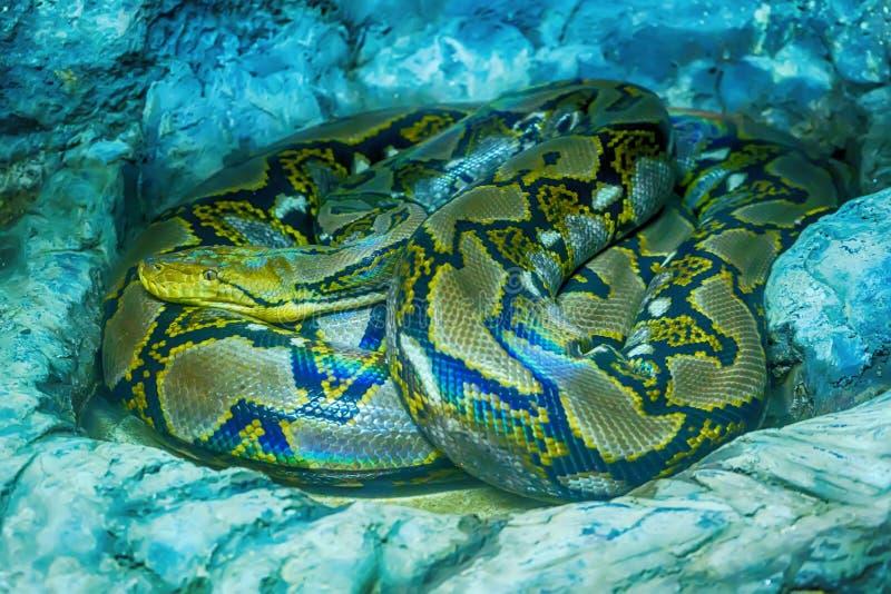 Python met een netvormig patroon stock fotografie