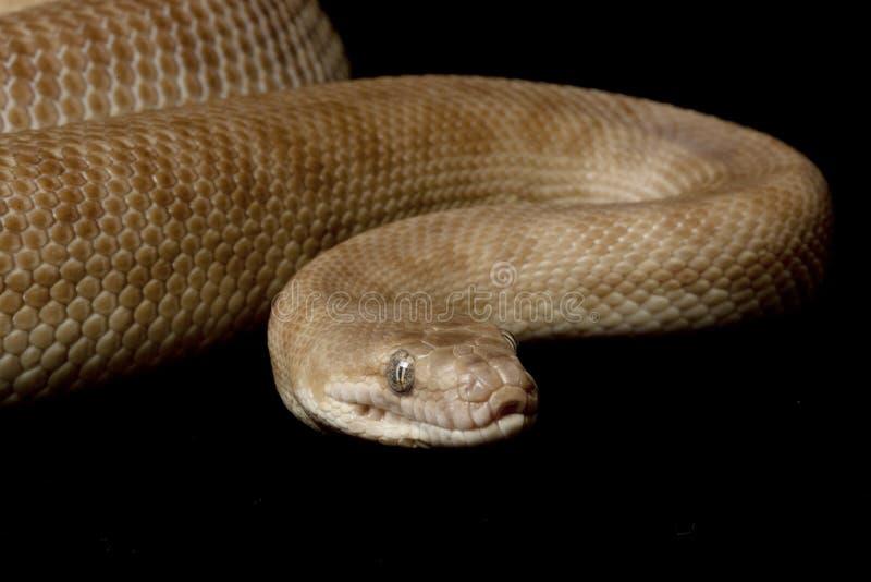 python s d'enfants photos stock