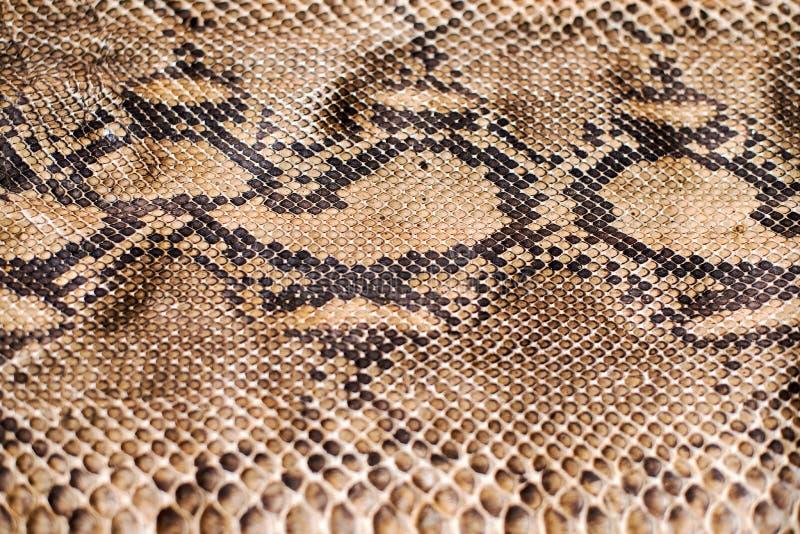Python snake skin pattern. A Python snake skin pattern royalty free stock photography