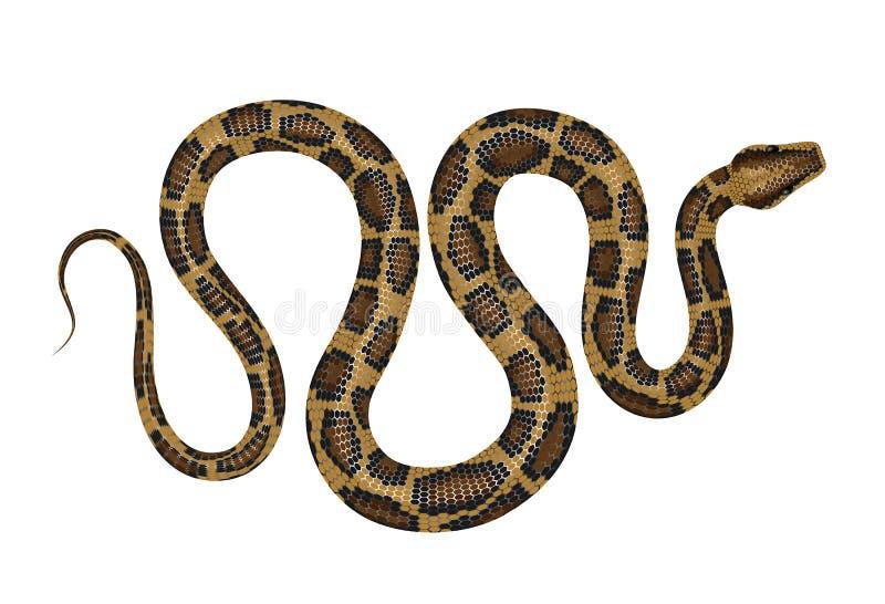 Python vectorillustratie royalty-vrije illustratie