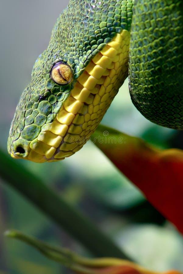 Python vert d'arbre photos stock