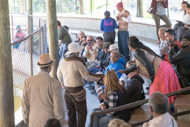 Pytonu przedstawienie w błota safari parku zdjęcie royalty free