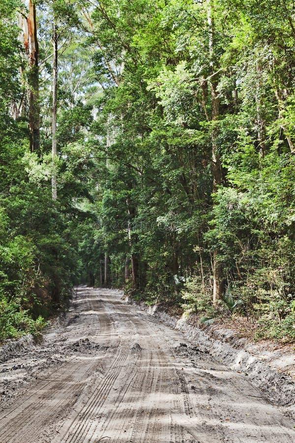 QE δρόμος τροπικών δασών της FI vert στοκ εικόνες