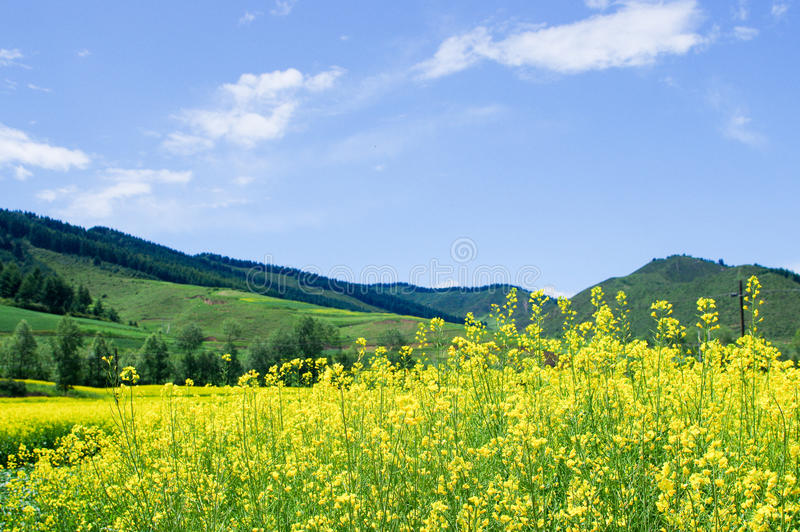 Qilian山 库存照片