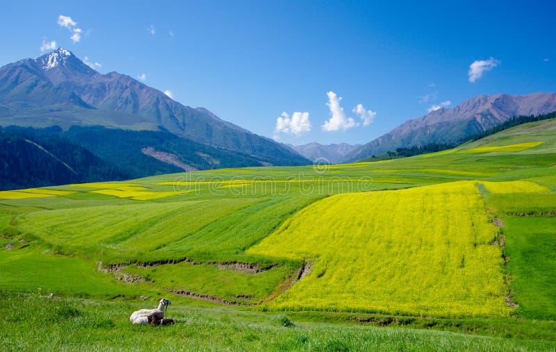 Qilian山 图库摄影