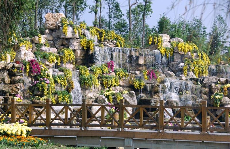 Qingbaijiang, Cina: Crisantemo Waterefall fotografia stock libera da diritti