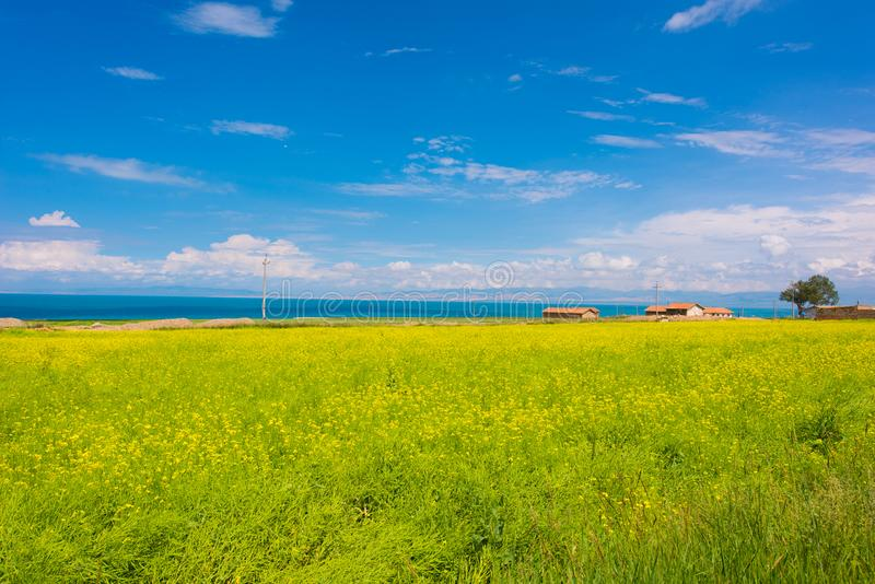 Qinghai Lake. ,is a famous 5A scenic spot,in qinghai province ,Northwest China royalty free stock photography