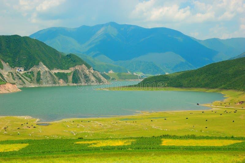 Qinghai porcelanowy Kwiat i Pole Krajobraz fotografia stock