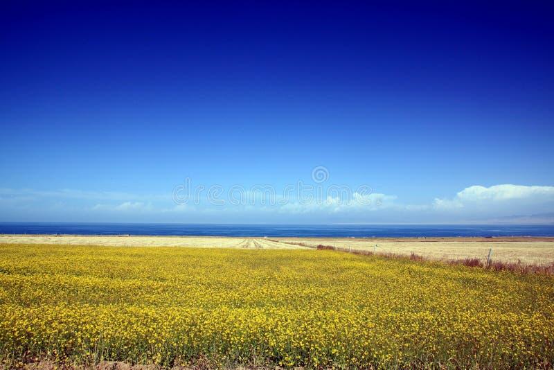 Qinghai sjölandskap royaltyfria bilder