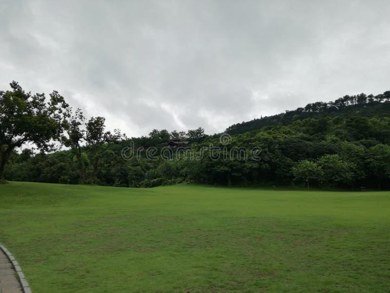 qingxiu lasu państwowego halny park obraz royalty free