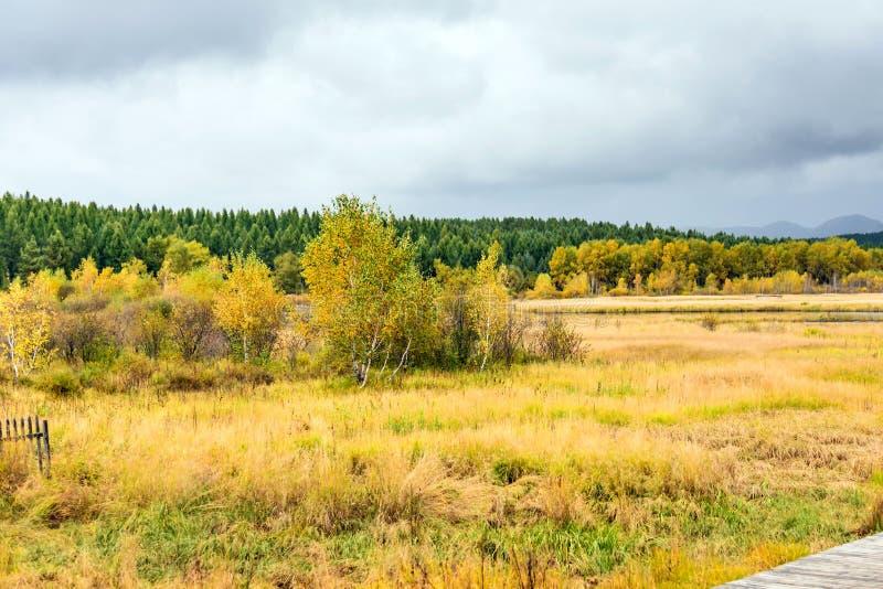 Qixinghu wetland park Autumn scenery royalty free stock photos