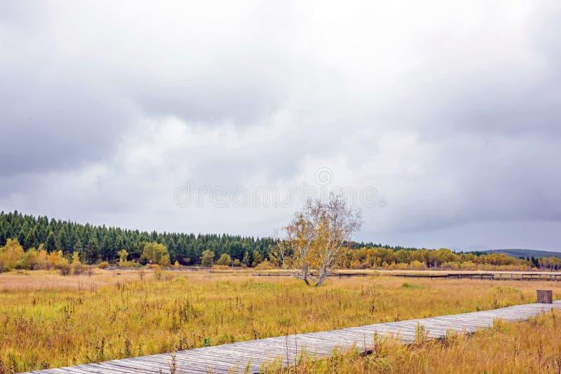Qixinghu wetland park Autumn scenery stock photos