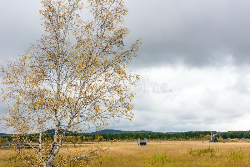 Qixinghu wetland park Autumn scenery stock images