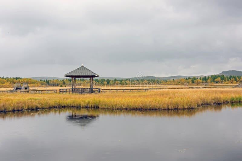 Qixinghu wetland park Autumn scenery royalty free stock photography
