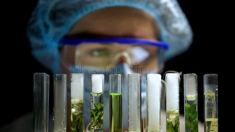 Qu?mico que comprueba la reacci?n en tubos con las plantas, desarrollo del combustible alternativo fotos de archivo libres de regalías