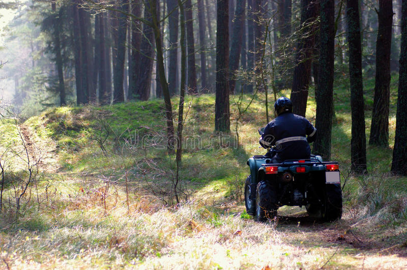 Quad in forest stock image