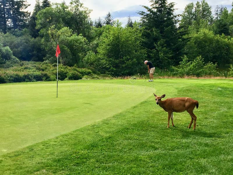 Quadra ö, British Columbia, Kanada - Juli 7th, 2018: En man royaltyfria foton