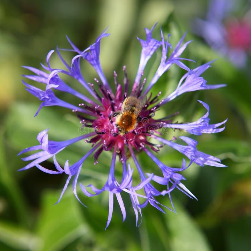 Quadrado da abelha imagem de stock