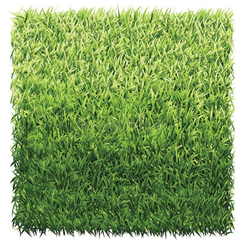 Quadrado da grama verde imagem de stock royalty free