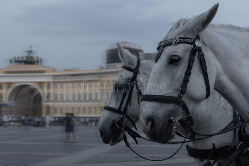 Quadrado do palácio, St Petersburg, Rússia imagens de stock