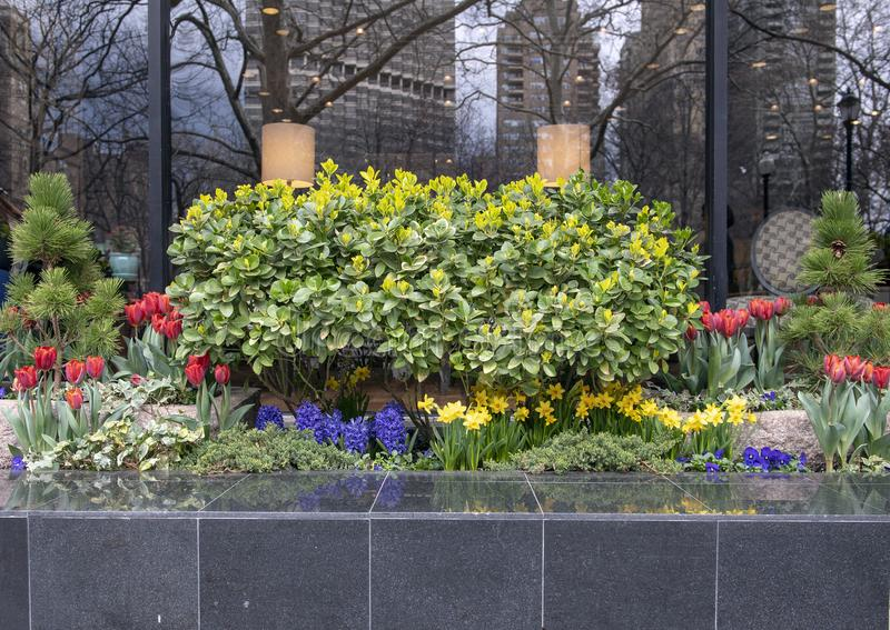Quadrado relativo à planta do pé bonito de Rittenhouse do passeio, Philadelphfia, Pensilvânia fotos de stock