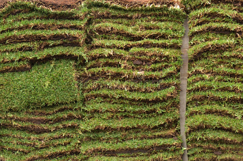 Quadrados do gramado da grama do jardim da grama fotos de stock