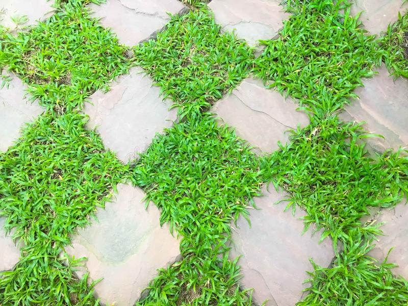 Quadrat des grünen Grases mit Stein lizenzfreie stockbilder