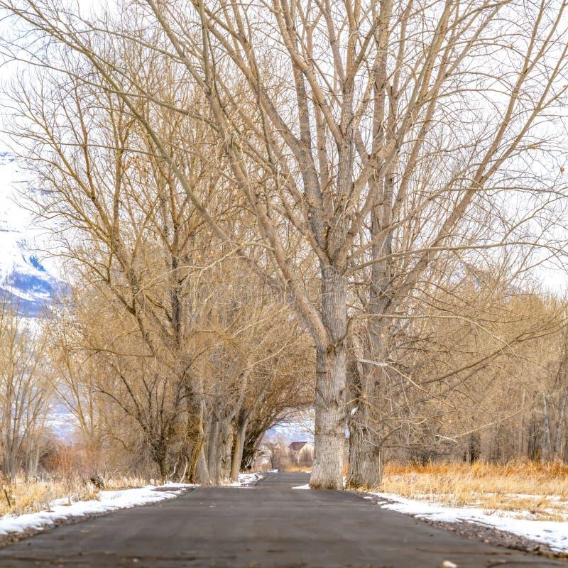 Quadrat gepflasterte Straße unter einem schneebedeckten Gelände mit hohen blattlosen Winterschlaf haltene Bäumen im Winter stockfotografie