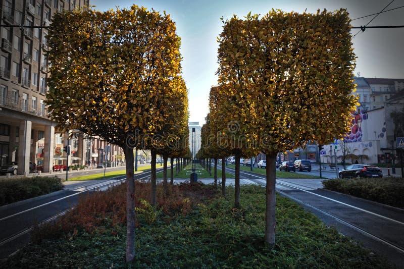 Quadratische Bäume in der Stadt stockbild