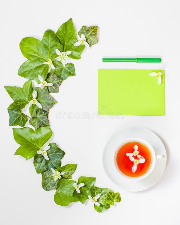 Quadratische Flachlage mit einem Muster von frischen Blättern und whi Grün des Efeus lizenzfreie stockfotos
