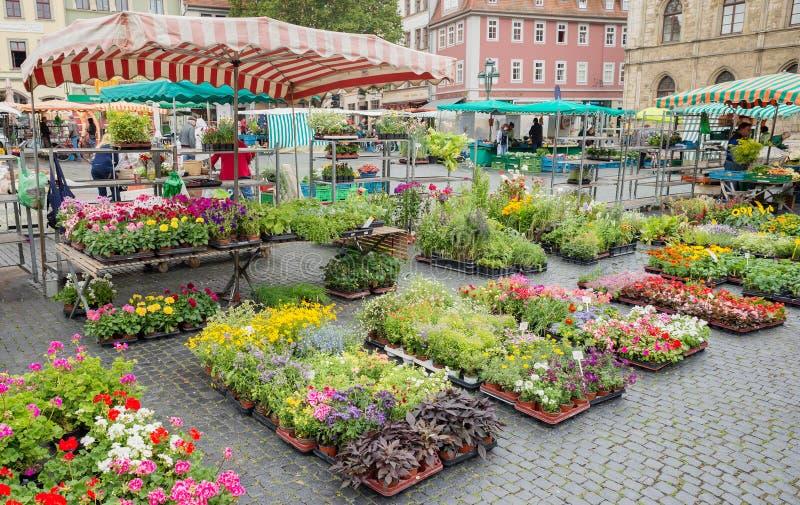 Quadratische Straßenmarkt-Blumenstall-Landwirtproduktion Weimar Deutschland stockbilder