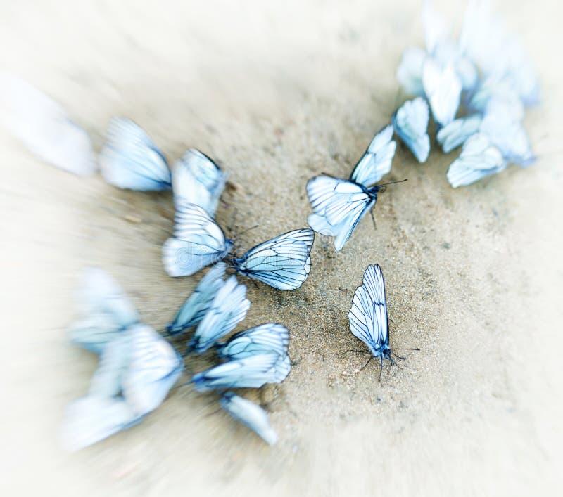 Quadratische weiße Schmetterlingsvignetten-Bewegungsunschärfeabstraktion lizenzfreie stockfotografie