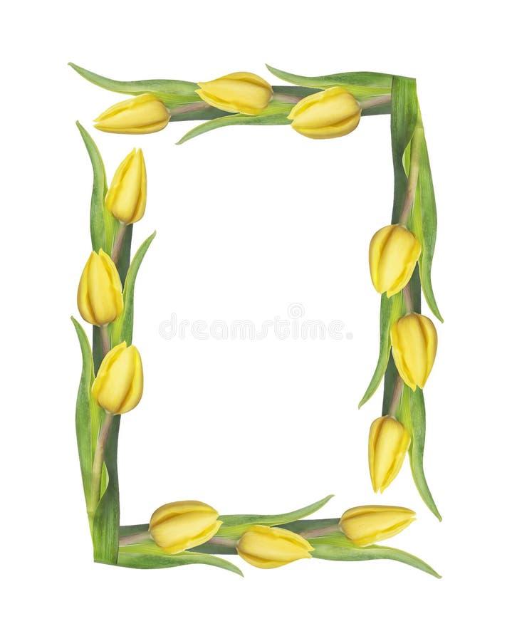Quadratischer Rahmen der Tulpen, lokalisiert auf Weiß lizenzfreies stockfoto